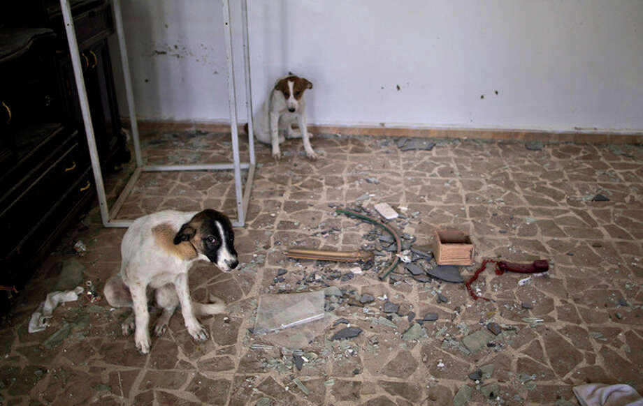 In this Wednesday, Aug. 29, 2012 photo, stray dogs take shelter inside a damaged Syrian house, one of more than a dozen homes destroyed in a Syrian government airstrike on August, 15, 2012, that killed more than 40 people in Azaz, on the outskirts of Aleppo, Syria. Over the past week, survivors and relatives have returned daily to collect from the rubble what can be salvaged as they also relive the day of the airstrike. (AP Photo/Muhammed Muheisen) / AP