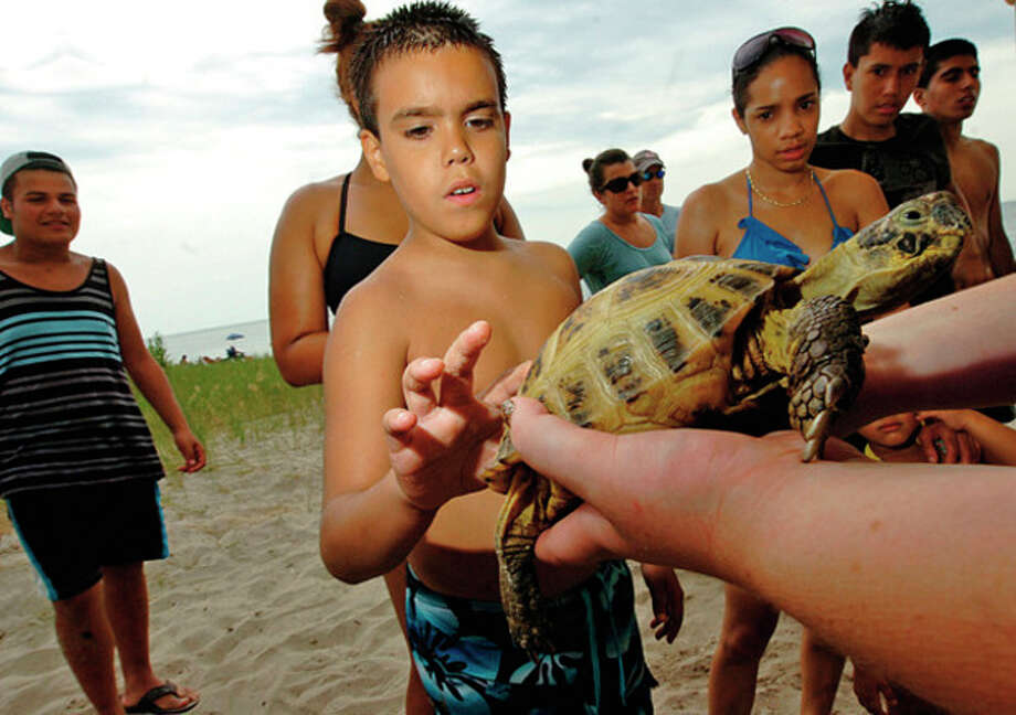Thomas Fitzpatrick pets Igor, a Russian Tortoise, during the Connecticut's Beardsley Zoo and the Sherwood Island State Park Nature Center live reptile program Saturday.Hour photo / Erik Trautmann / (C)2012, The Hour Newspapers, all rights reserved
