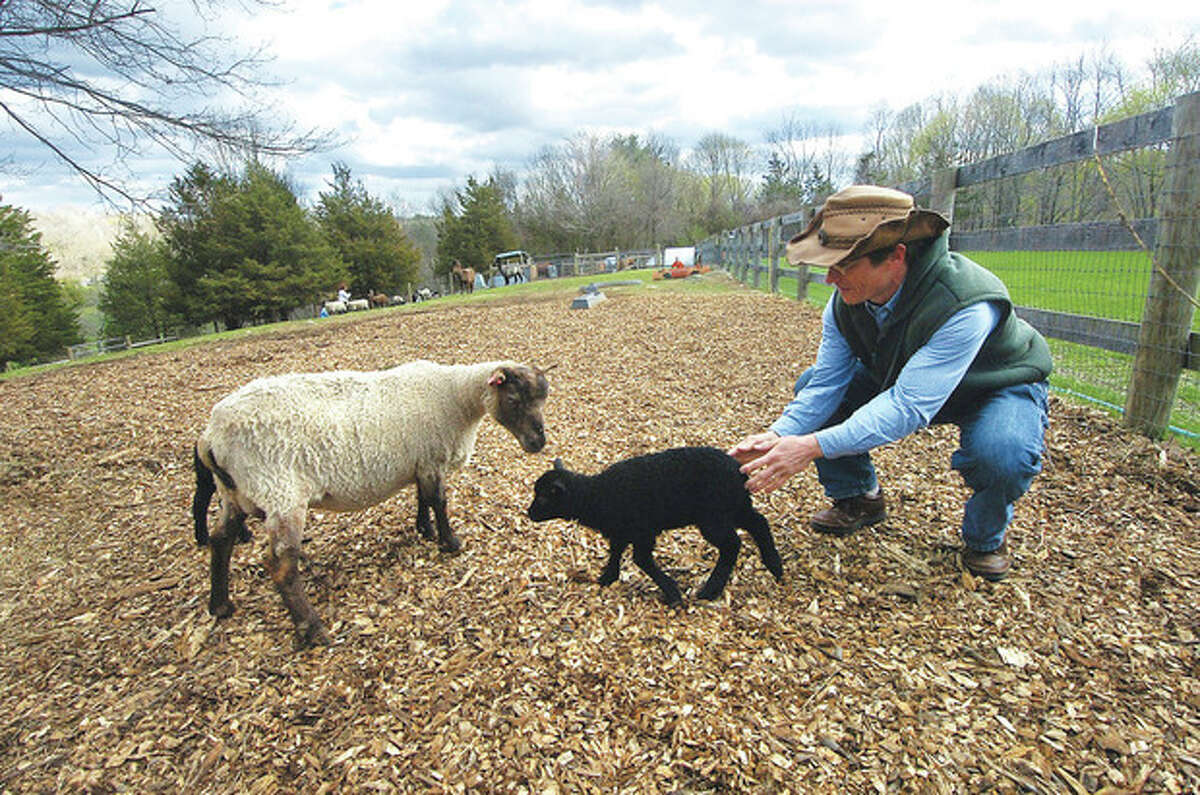 Hour photo / Alex von Kleydorff Kevin Meehan passes a newborn lamb over to her mother, as lambs are being born at Millstone Farm in Wilton.