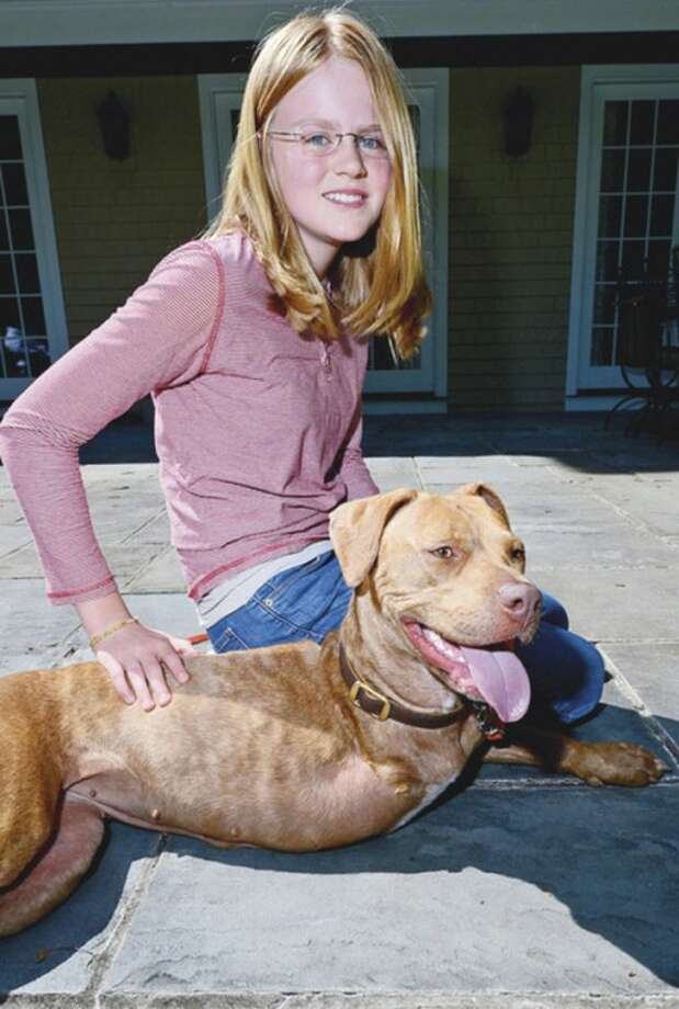 """13 year old Wilton resident, Claire Fraise, pictured with the two year old Pit Bull, Lucky, has started Lucky Tails, an organization whose goal is to find """"Forever"""" homes for the strays she fosters.Hour photo / Erik Trautmann"""
