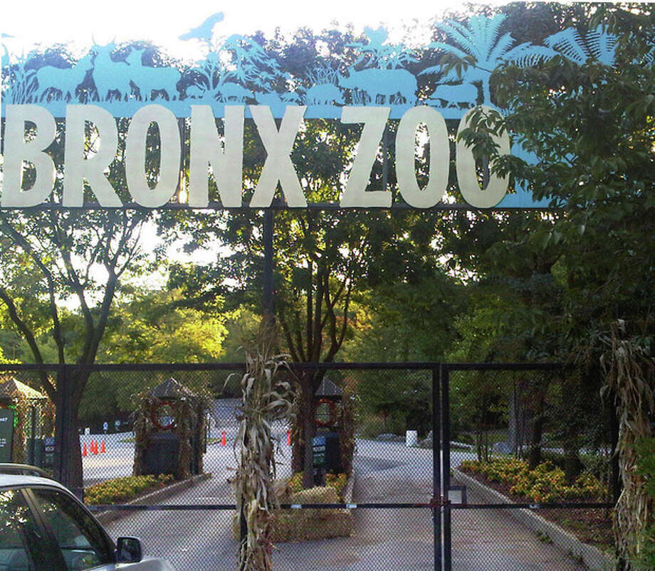 The ticket booths are empty and the gates are chained shut at an entrance to the Bronx Zoo in New York, Friday, Sept. 21, 2012. Zoo officials say a visitor who leaped into an exhibit and was mauled by a tiger was alone with the 400-pound beast for about 10 minutes before being rescued. (AP Photo/Jim Fitzgerlad) / AP