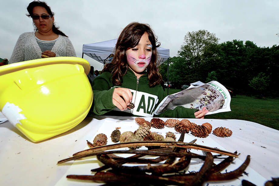 Jordane Macias, 8, counts out her pine cones from a Nature Scavenger Hunt at The 7th annual Norwalk Wilton Tree Festival at Cranbury Park Saturday. Hour photo / Erik Trautmann / (C)2013, The Hour Newspapers, all rights reserved