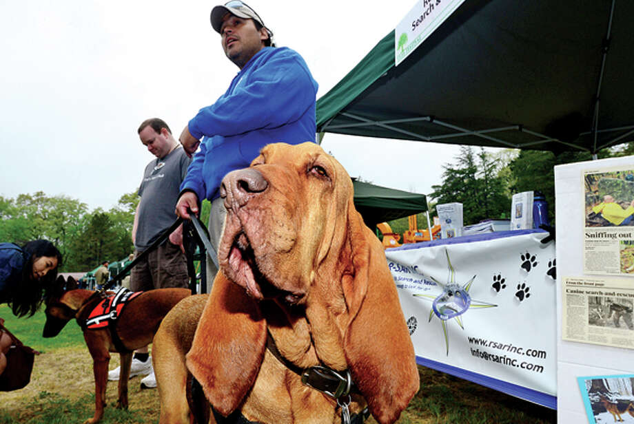 """Resources in Search and Rescue show their rescue dogs including Blood Hound, """"Ruby"""", at The 7th annual Norwalk Wilton Tree Festival at Cranbury Park Saturday. Hour photo / Erik Trautmann / (C)2013, The Hour Newspapers, all rights reserved"""