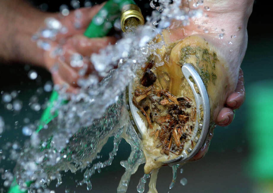 A worker washes Will Take Charge's hoof after a workout at Pimlico Race Course in Baltimore, Wednesday, May 15, 2013. The Preakness Stakes horse race is scheduled to take place May 18. (AP Photo/Patrick Semansky) / AP