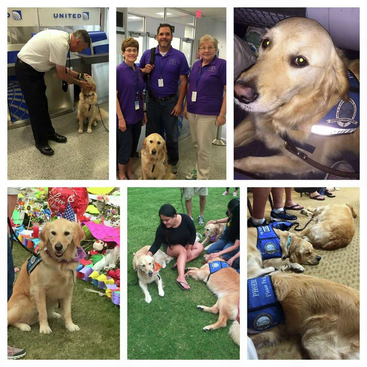 Phoebe, the Texas pup sent to Orlando, shared a photo collage of her day to her Facebook.