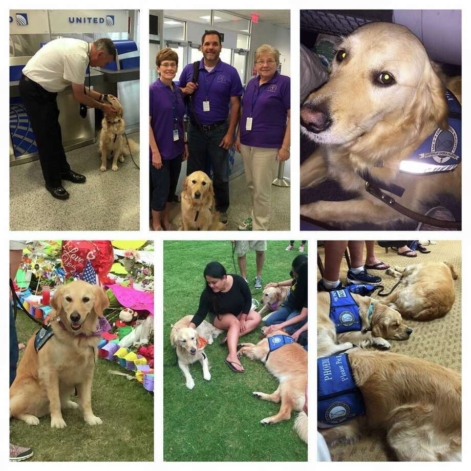 Phoebe, the Texas pup sent to Orlando, shared a photo collage of her day to her Facebook. Photo: Facebook/ LCC