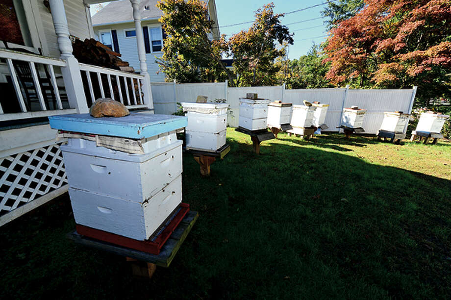 Norm and Andrew Cote keep bees aAndrew's home on on Silvermine Ave. Complaints against the Silvermine Avenue beekeepers prompts Zoning commissioners to revisit antiquated regulations regarding farms in Norwalk. Hour photo / Erik Trautmann / (C)2012, The Hour Newspapers, all rights reserved
