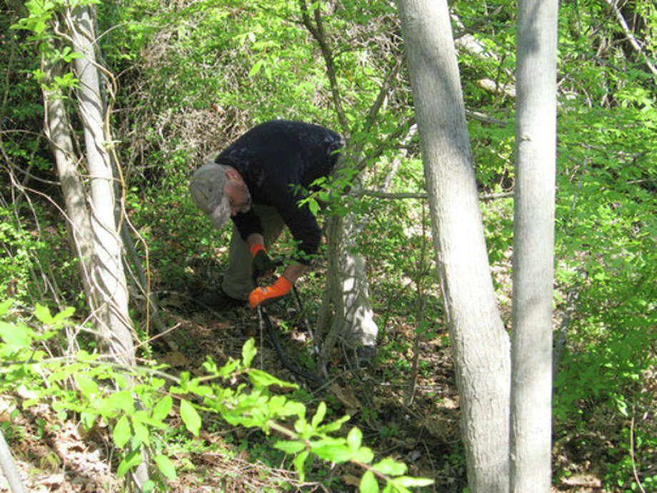 Photo by David ParkRob McWilliams, author of McWilliams Takes a Hike, helps to blaze a trail in Norwalk on May 4.