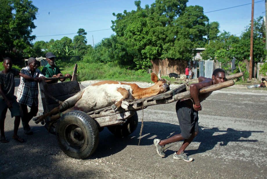 People transport their cow that died during the passing of Hurricane Sandy on a wheelbarrow to an area to slaughter it in Port-au-Prince, Haiti, Saturday, Oct. 27, 2012. As Hurricane Sandy swirls off toward the U.S. East Coast, the Caribbean is mourning the storm-related deaths of at least 43 people and cleaning up wrecked homes, felled power lines and fallen tree branches. (AP Photo/Dieu Nalio Chery) / AP
