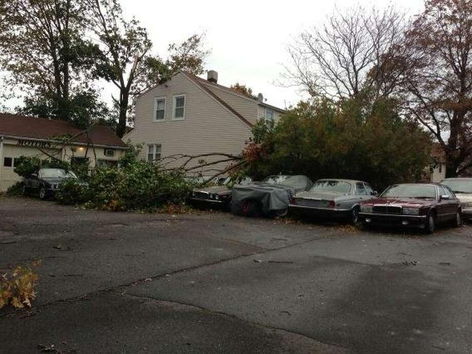 Tree falls on cars at repair shop on Platt Street.