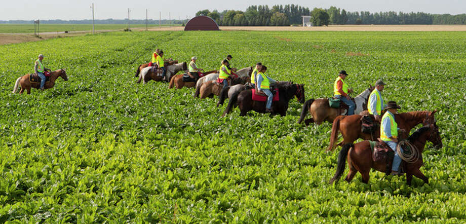 Members of the Marshall County Sheriff's Posse on horseback search a sugar beet field in East Grand Forks, Minn. on Thursday, Aug. 8, 2013 near the home of Anthony Kuznia, 11, an autistic boy who was reported missing Wednesday afternoon, Aug. 7, 2013. His body was found Thursday in the Red River. The phenomenon goes by various names - wandering, elopement, bolting - and about half of autistic children are prone to it, according to research published in 2012 in the journal Pediatrics. (AP Photo/The Grand Forks Herald, Eric Hylden) / The Grand Forks Herald