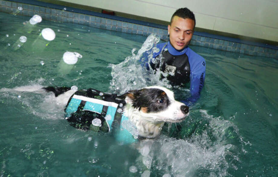Hour Photo/Alex von Kleydorff . Steven Cordoba helps Marty, a rescued Austrialian Cattle dog get past his anxiety to swim, during a training session in the pool at Dog Gone Smart