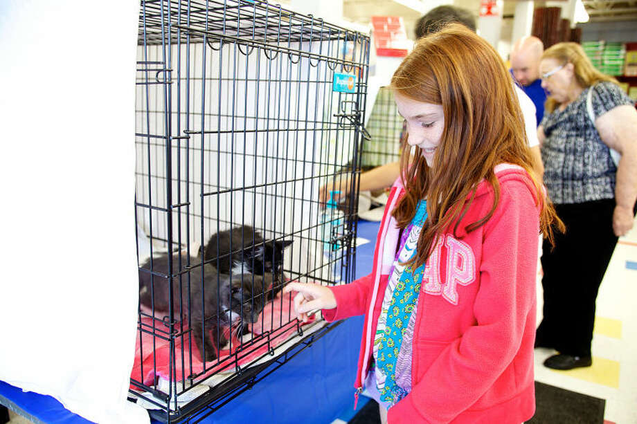 Olivia Bollo, 10, pets a kitten during a T.A.I.L.S Kitten Kaboodle adoption event at Petco in Norwalk Sunday afternoon. Hour Photo / Danielle Calloway