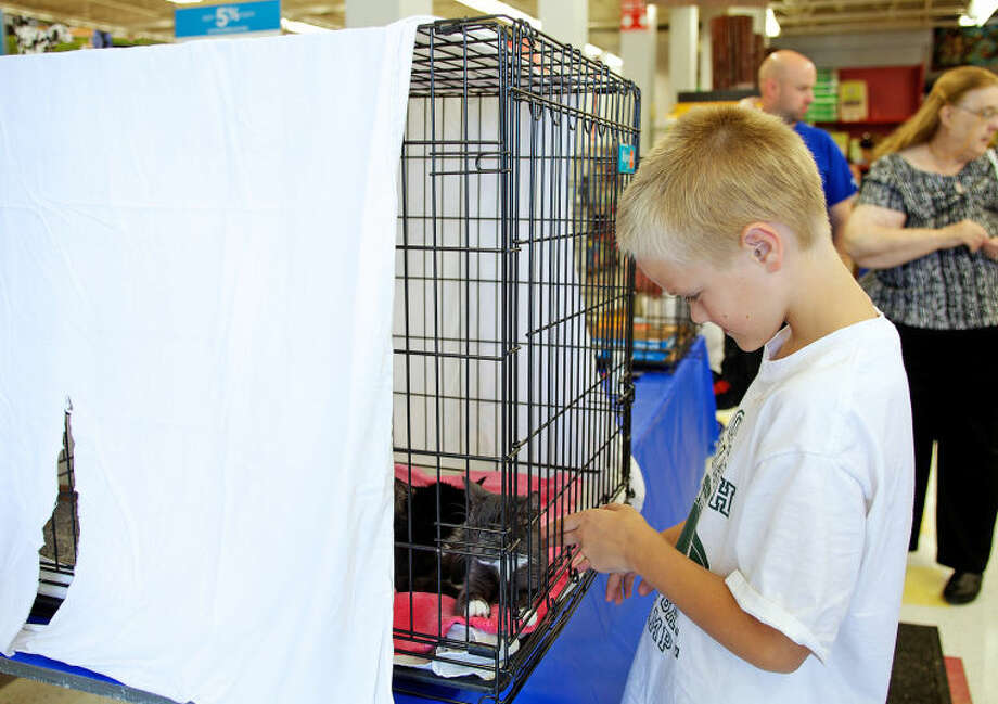 Chase Meyer, 9, pets a kitten during a T.A.I.L.S Kitten Kaboodle adoption event at Petco in Norwalk Sunday afternoon. Hour Photo / Danielle Calloway