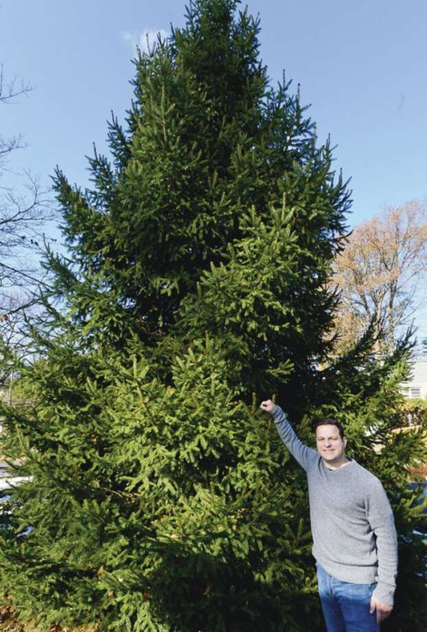 Hour photo / Erik TrautmannFrom among roughly 20 offers, Norwalk selects a tree belonging to Luigi DiMeglio on McAllister Avenue to be placed at 50 Washington St. for the annual SoNo tree lighting.