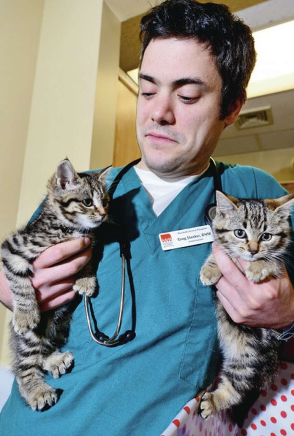 Two kittens who were rescued from hurricane Sandy, Paul and Mary, with Norwalk Animal Hospitals Greg Stecker. Hour photo / Erik Trautmann