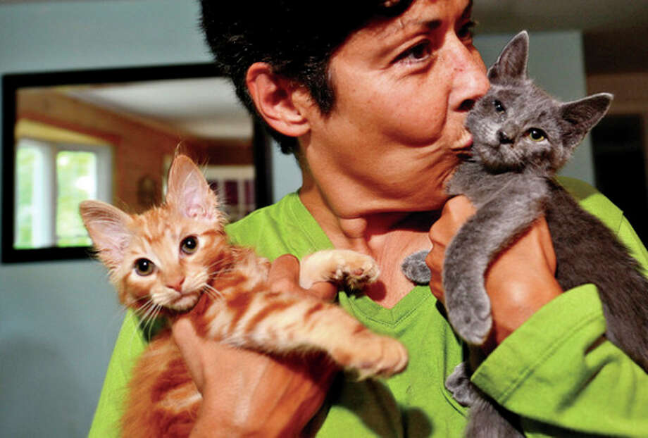 """Norwalk resident Nancy Corbo is fostering kittens like Dorito and Little Puss that will be up for adoption on Saturday at Petco in Norwalk as part of the """"Kitten Kaboodle"""" event.Hour photo / Erik Trautmann / (C)2013, The Hour Newspapers, all rights reserved"""