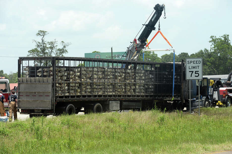 Dps 2 000 Chickens Killed In 18 Wheeler Fire San