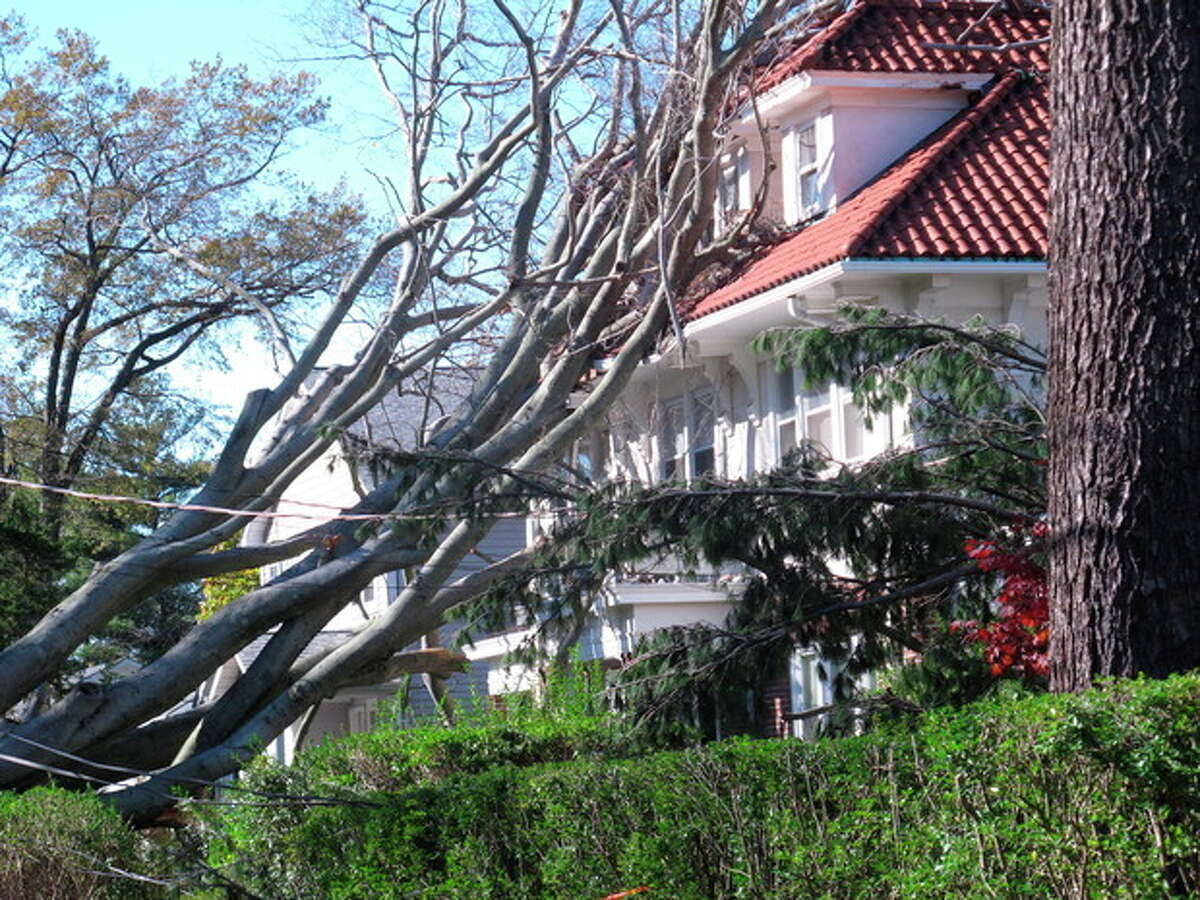In this Sunday, Nov. 4, 2012 photo, a tree felled by Superstorm Sandy rests against a house in New Rochelle, N.Y. The storm took down thousands of trees across the New York and New Jersey regions. (AP Photo/Jim Fitzgerald)