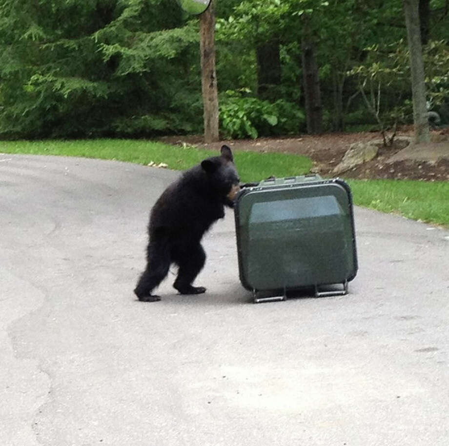 AP photoIn this photo provided by Patty Willams, a three-legged bear tries to open a bear-proof trash can in Burnsville, N.C. / Patty Williams