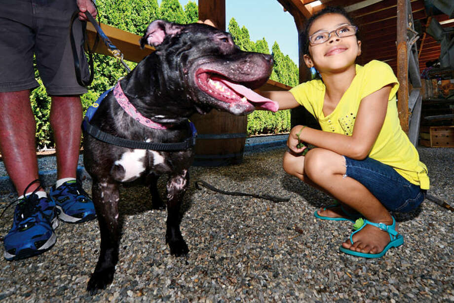 Madison Nicholson, 11, meets Mama, a 3 year od terrier atthe Barks & Beer benefit for Bully Breed Rescue where a $5 donation gets you a free beer at the new Farm Terrace Beer Garden at SoNo Market Saturday. Erik Trautmann photo