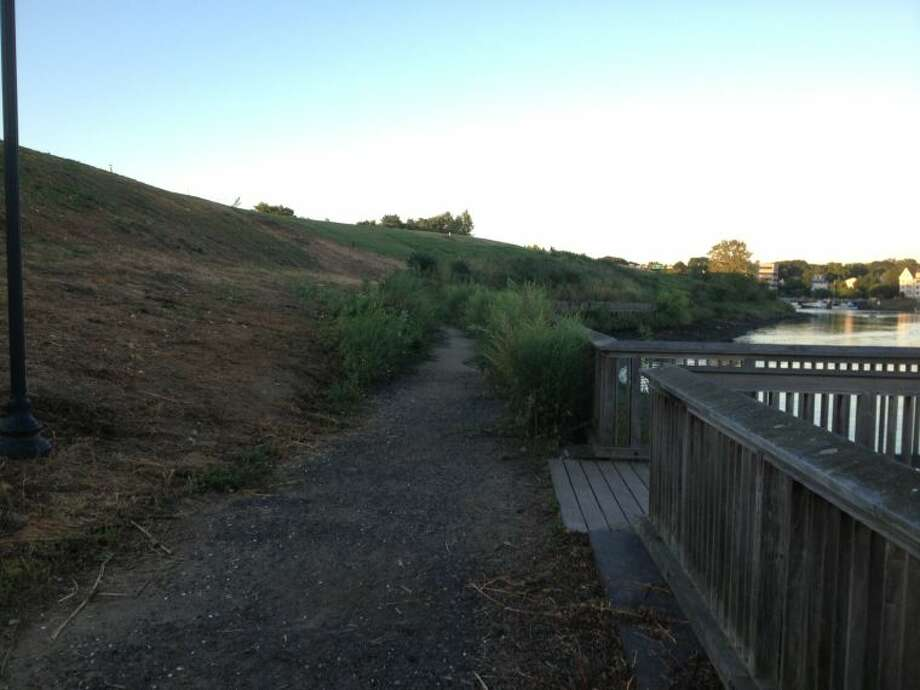 gowth on path- Oyster Shell Park