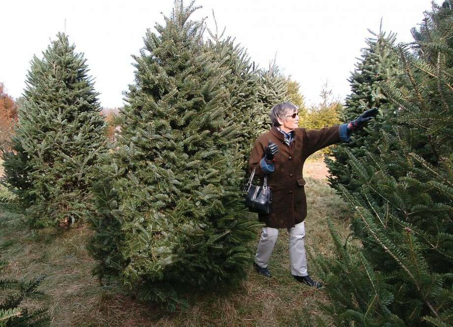 Hour Photo/Alex von Kleydorff. Davina Porter chooses a Fraser Fir for her familys Christmas tree at the CT Audubon Society Christmas tree farm in Westport.
