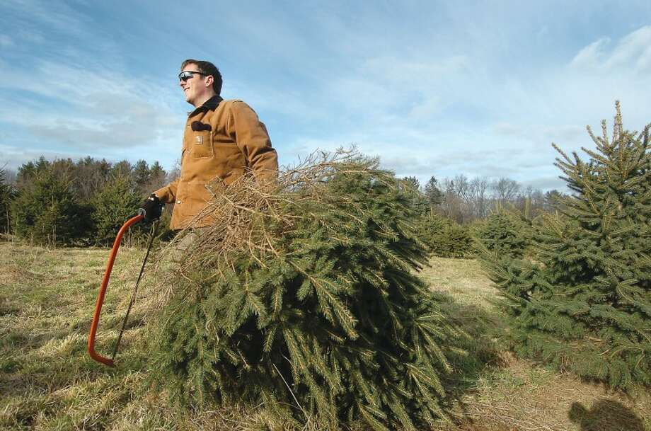 Hour Photo/Alex von Kleydorff. Daniel Ford cuts a fresh smaller Christmas tree from the field at the CT Audubon Society Christmas tree farm in Westport.
