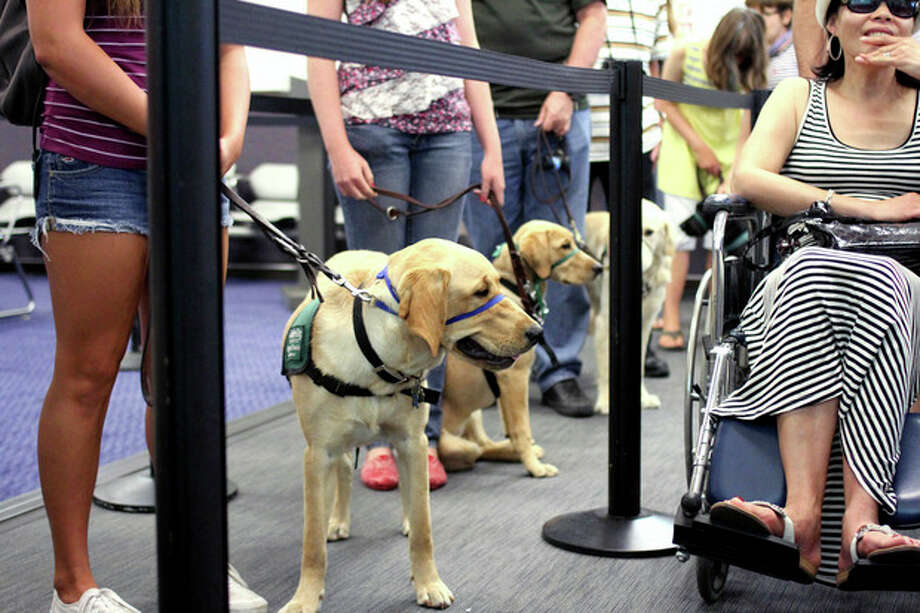 In this July 14, 2012, photo, provided by Air Hollywood, members and volunteers from Guide Dogs for the Blind (GDB) take a K9 flight class, as they experience airport distractions during a simulated airport security check in at the K9 school in Los Angeles. The idea was the brainchild of Talaat Captan, president and CEO of Air Hollywood, the world's largest aviation-themed film studio, who noticed a dog owner having a rough go getting a dog through airport security. (AP Photo/Air Hollywood, Matt Souder) / Air Hollywood