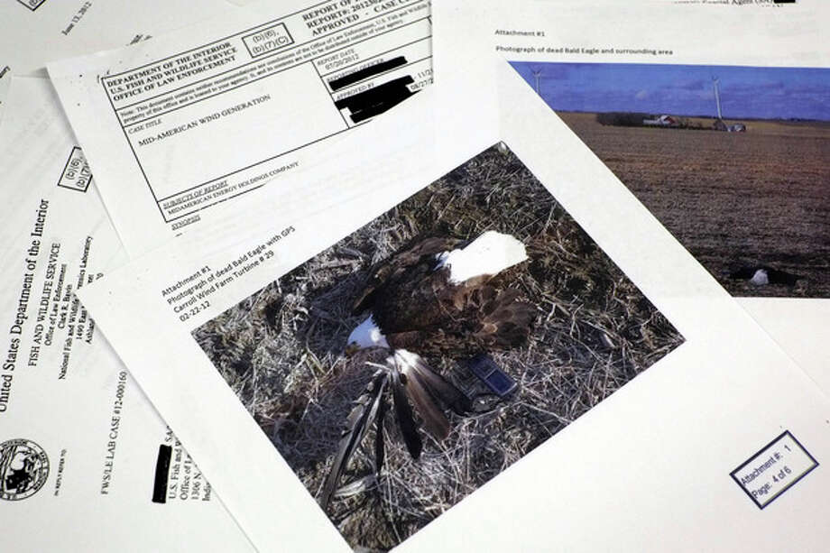 This photograph made in Washington, Wednesday, Sept. 11, 2013, shows pages from a U.S. Fish and Wildlife Office of Law Enforcement document obtained with a Freedom of Information Act, (FOIA) request by the Associated Press in the investigation of a dead bald eagle the reports says was found at the Carroll Wind Farm in Carroll, Ia. (AP Photo/J. David Ake) / AP