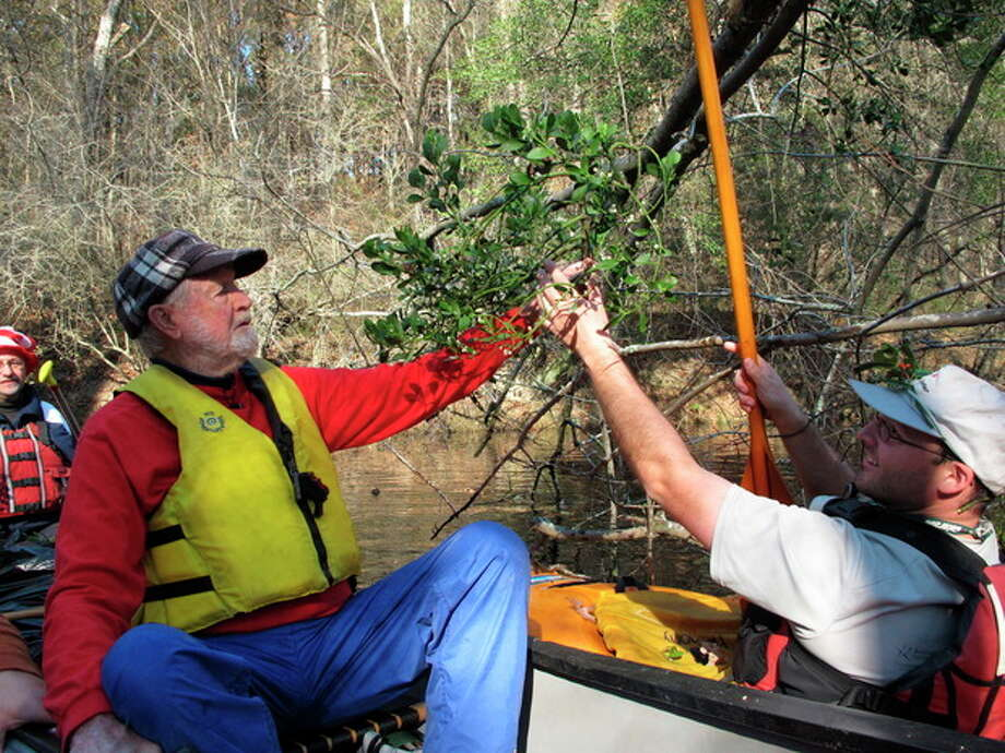 Seventh-grade science teacher Lucas Conkle hands a sprig of mistletoe to Forrest Altman on the Upper Little River near Lillington, N.C., on Saturday, Dec. 1, 2012. Altman began the Sprig Outing 30 years ago as a fundraising event for local conservationists. (AP Photo/Allen Breed) / AP