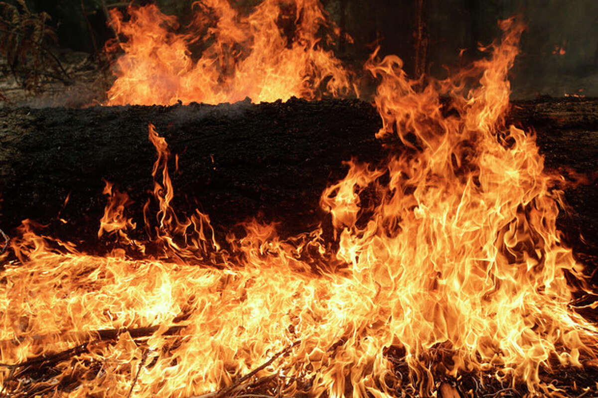 A tree burns near Yosemite National Park, Calif., on Tuesday, Aug. 27, 2013. Firefighters gained some ground Tuesday against the huge wildfire burning forest lands in the western Sierra Nevada, including parts of Yosemite National Park. (AP Photo/Jae C. Hong)