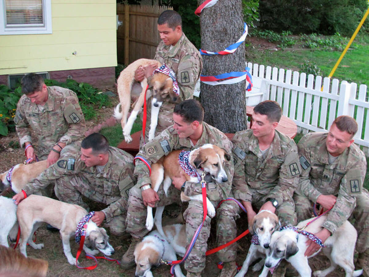 Members of the New York National Guard are reunited with eight mixed breed dogs that they found while on patrol in Afghanistan earlier this year, Wednesday, Sept. 4, 2013 in Port Jefferson Station, N.Y. A 65-pound mixed breed named Sheba was