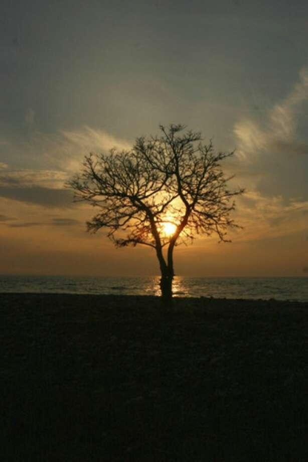 Hour photo / Chris BosakThe sun sets behind a tree on Sheffield Island during December 2012.