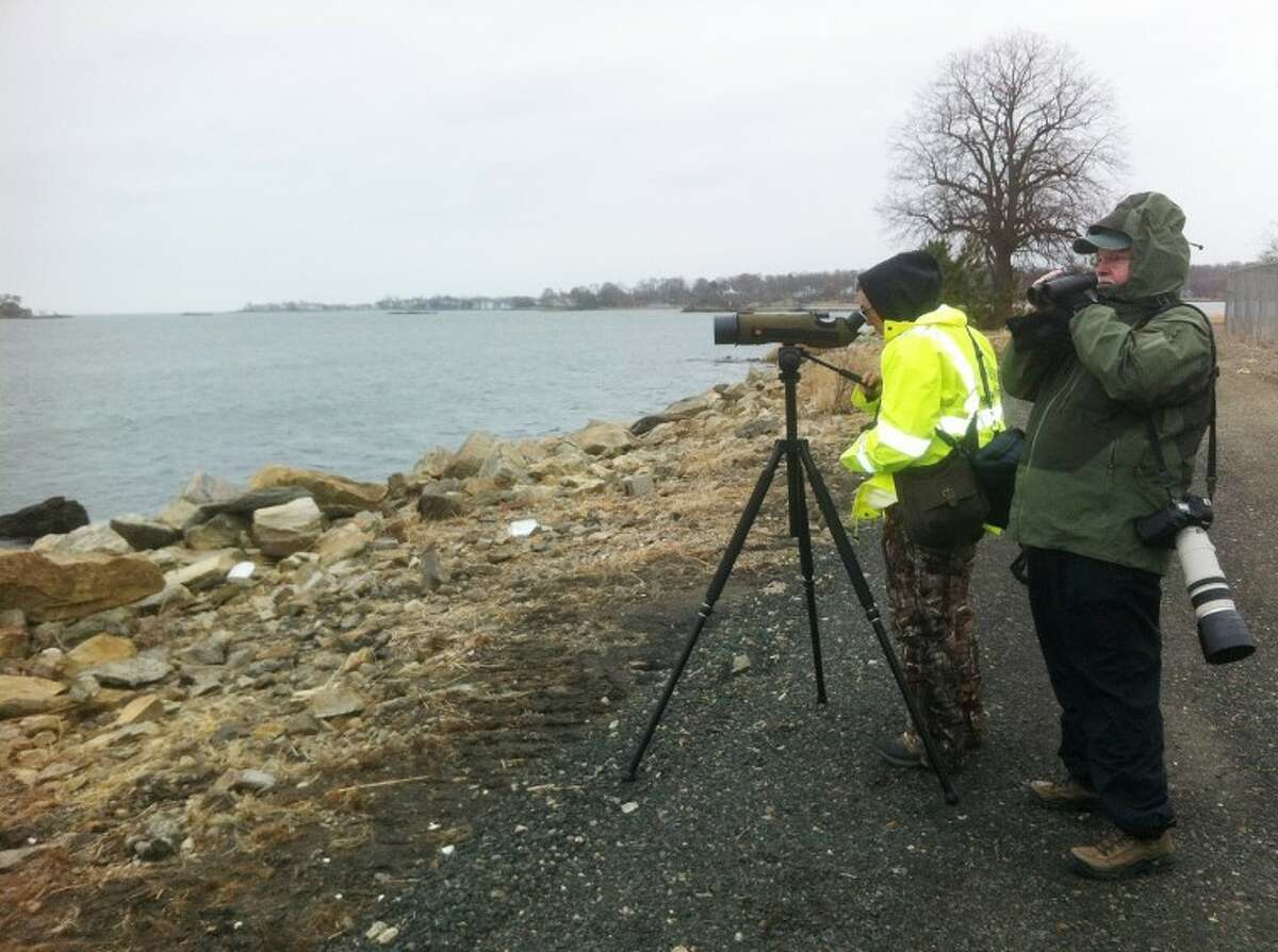 Photo copyright Mardi Dickinson Birdwatchers, including Townsend Dickinson, right, brave the elements to participate in the Christmas Bird Count in Norwalk on Sunday.