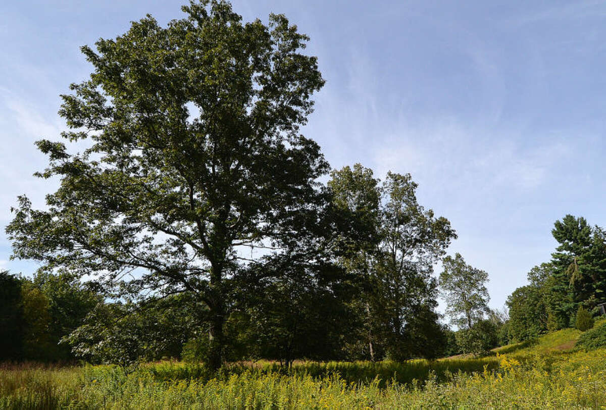 Hour Photo/Alex von Kleydorff . Some of the meadows that are part of the Keiser property in Wilton