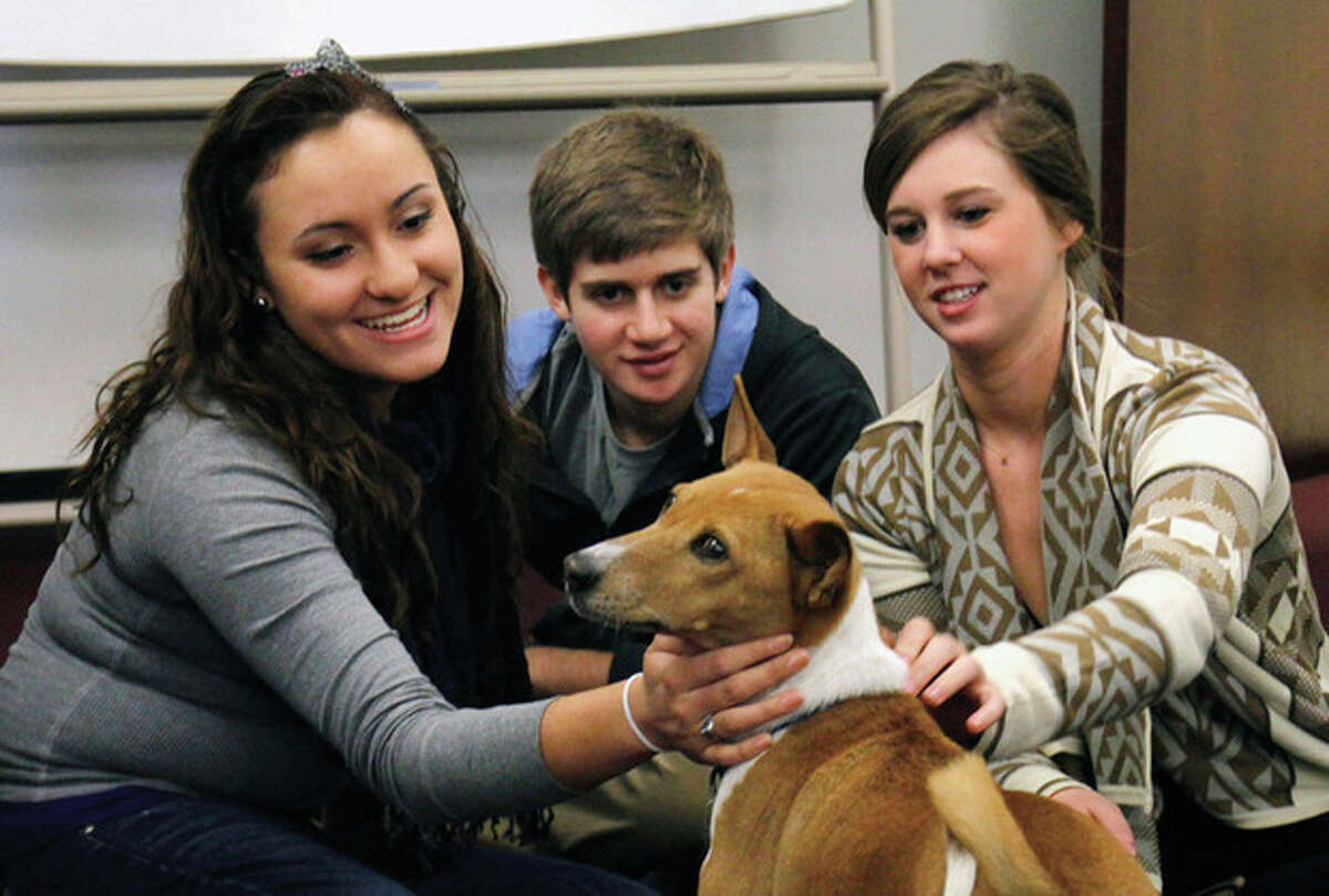 AP photo / The News-Observer, Harry Lynch From left, University of North Carolina freshmen Laura Gamo along with Lucas John and sophomore Haley Ross play with Mickey, an 11-year-old basenji, a former show dog, in the Park Library in Carroll Hall at UNC, Chapel Hill, on Dec. 12. Mickey was one of this fall's therapy dog exam week diversions brought onto campus for meetups at UNC libraries as part of UNC's 'Week of Balance' events.