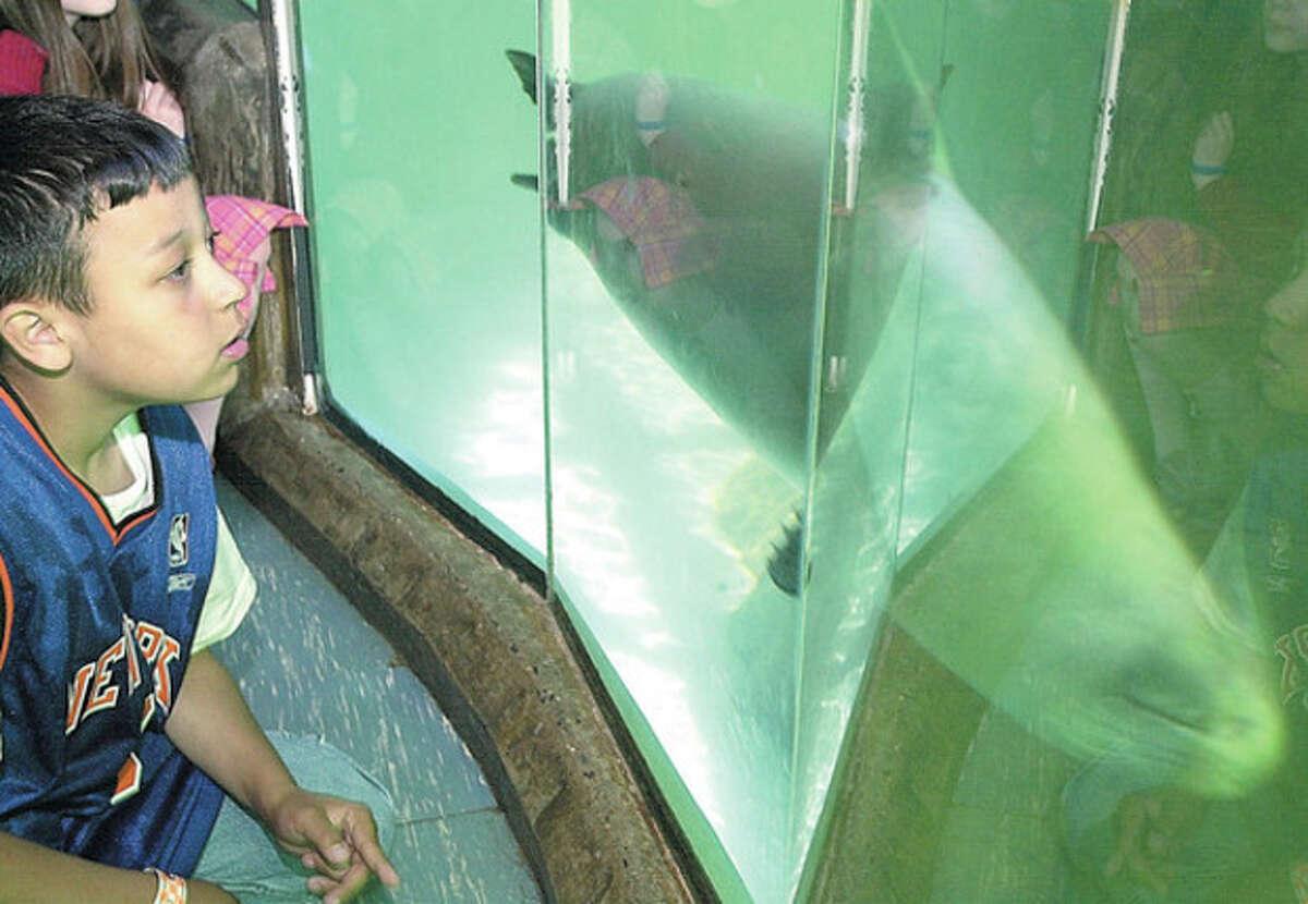 4th grade K.T.Murphy student, Christian Scott at the seal tank during the school's visit to the Maritime Aquarium on Monday/photo matthew vinci