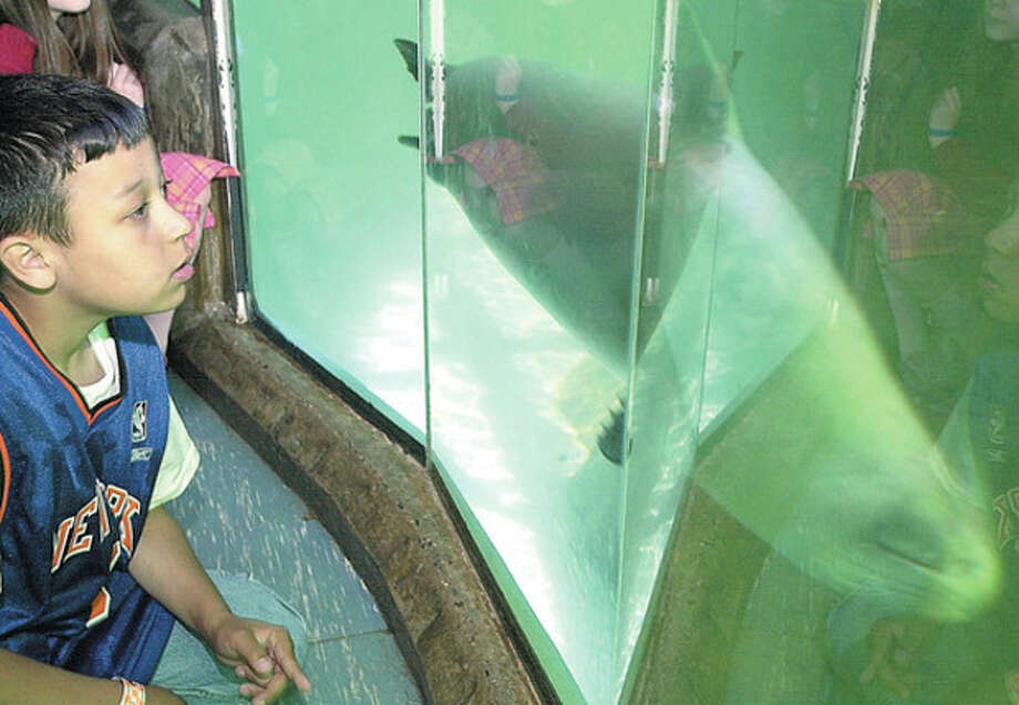 4th grade K.T.Murphy student, Christian Scott at the seal tank during the school's visit to the Maritime Aquarium on Monday/photo matthew vinci