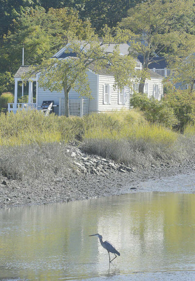Hour photo / Alex von KleydorffA great blue heron wades in the water near the property at 2 Nearwater Road. Residents of Rowayton have come together to oppose a plan to build a house that would obstruct the view from Farm Creek Nature Preserve.