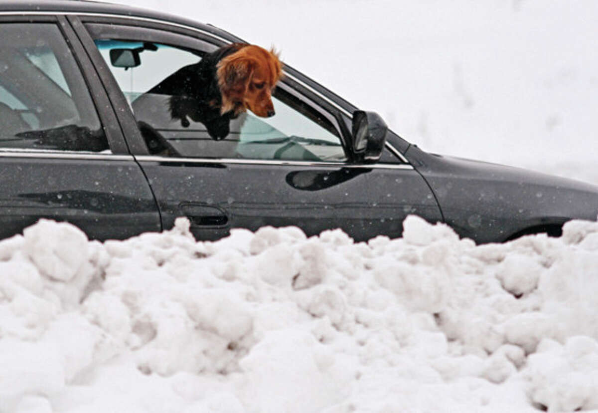 A dog pokes its head out the window to look at the accumulating snow near an exit ramp on Highway 45 in West Bend, Wis., Friday, Dec. 28, 2012. Snow is expected to continue in West Bend through the weekend. (AP Photo/West Bend Daily News, John Ehlke)