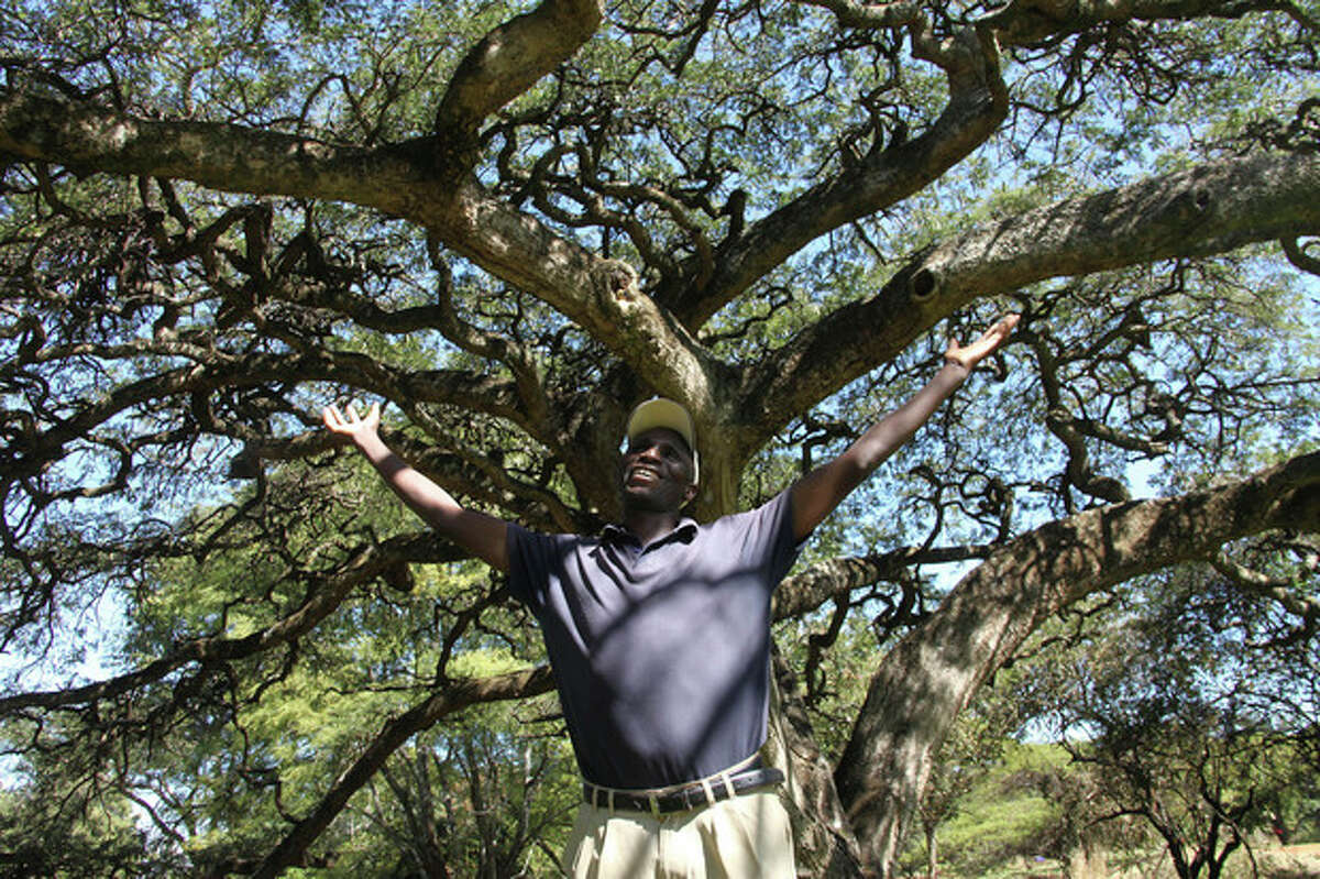 In this photo taken Monday, June 3, 2013, green keeper Fibion Chikwaya stands beneath the century-old thorn tree with an umbrella-shaped canopy that offers shade to players on the 13th hole of Zimbabwe's oldest golf course, The Royal Harare Golf Club. The indigenous trees are to stay, but