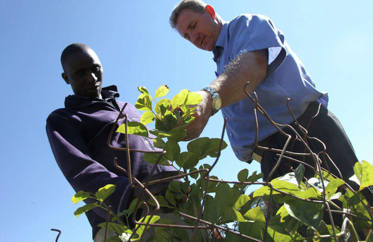 in this photo taken Monday, June 3, 2013, golf club manager, Ian Mathieson, right, and green keeper Fibion Chikwaya look at a newly planted indigenous tree at the Royal Harare Golf Club. ?