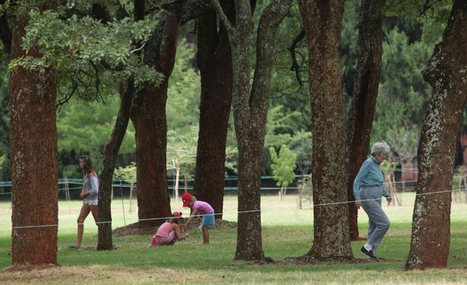 "in this photo taken Monday, June 3, 2013, a family plays underneath the indigenous msasa trees at the Royal Harare Golf Club. Club manager Ian Mathieson says a program to cut down ""alien'' trees and replace them with trees ""indigenous"" to Zimbabwe is well under way. (AP Photo/Tsvangirayi Mukwazhi) / AP"