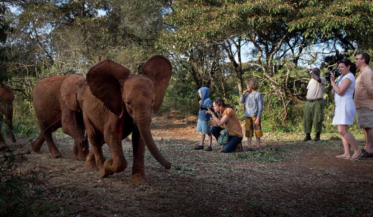 Foreign visitors take photographs as baby orphaned elephants return back for feeding time after spending the day in Nairobi National Park, at the David Sheldrick Wildlife Trust elephant orphanage in Nairobi, Kenya Monday, Sept. 30, 2013. The risk to the country's tourism was one of the first concerns expressed by officials during the initial days of the Westgate Mall siege, but tourists continue to fly to Kenya for safaris and beach vacations seemingly despite a number of foreigners being killed in last week?'s attack. (AP Photo/Ben Curtis)