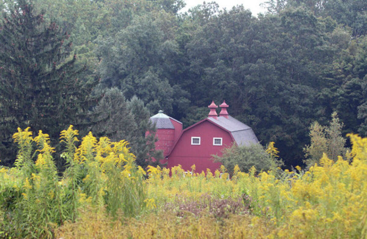 Hour photo/Chris Bosak Scenes of fall Goldenrod is in bloom as the red barn at Dolce Norwalk Center looms in the background. Goldenrod is a late-blooming wild flower and an important source of food for migrating butterflies.