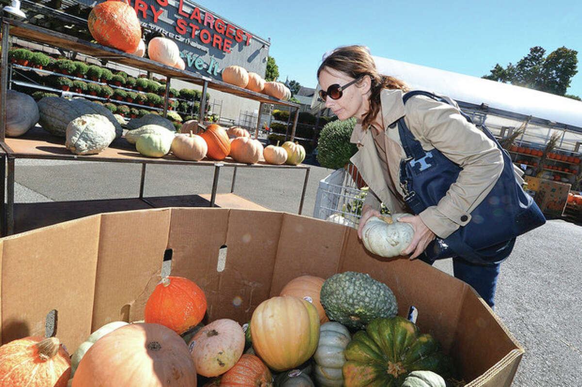 Hour Photo/Alex von Kleydorff Scenes of Fall Lisa Allan looks for the perfect Gourd for her doorstep amid all the choices of Jack O Lantern, Sugar and mini pumpkins along with all the different colored gourds at Stew Leonard's garden center on Westport Ave on Monday, the first full day of the fall season.