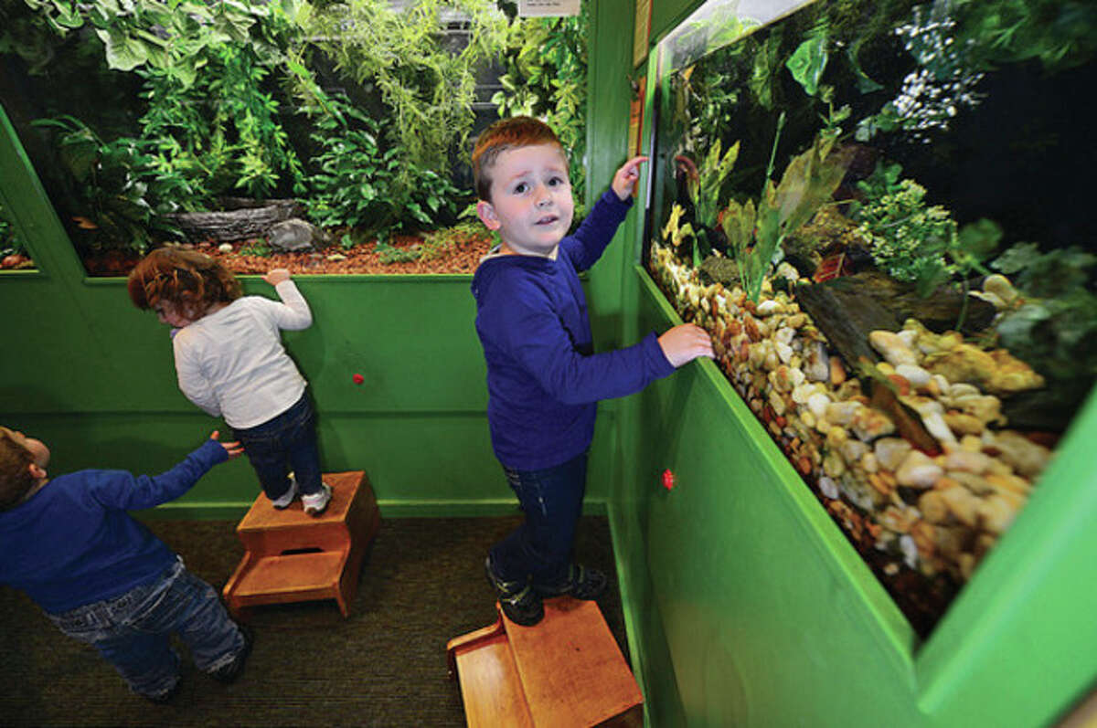 Hour photo / Erik Trautmann 3-year-old Giancarlo Mastrogiacomo looks at the frog exhibit at The Maritime Aquarium Tuesday. The aquarium is looking to renew its lease with the city.