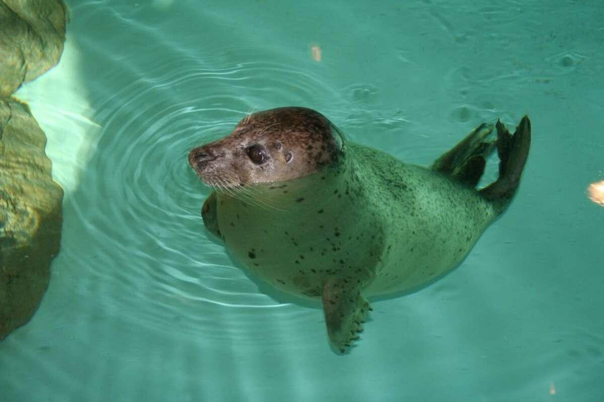 Maritime Aquarium offers free admission