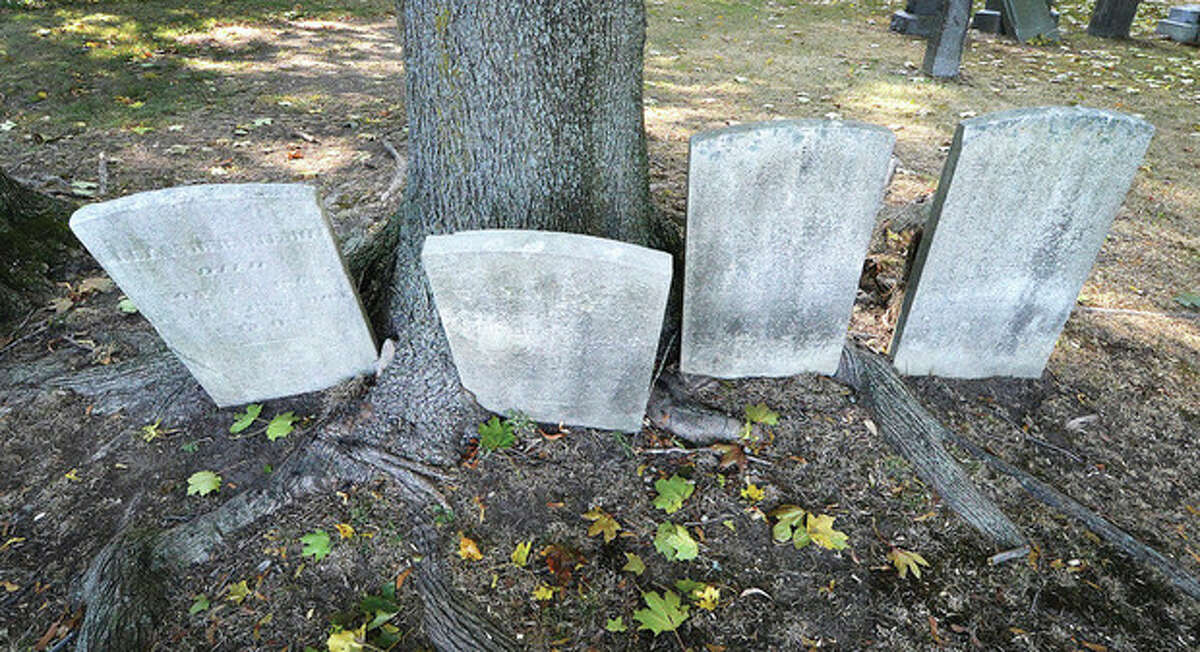 Hour Photo/Alex von Kleydorff Gravestones from the turn of the century make way for the roots of a large tree in Pine Island Cemetery in Norwalk